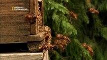 Böceklerin Dünyası (National Geographic Türkçe Belgesel)