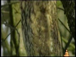BUDDHA BAR: NATURE 3 OF 3