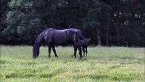 When Horses Whisper - (314) 274-6219