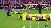 Mia le beagle très distrait pendant un concours d'Agility