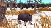 Bull Fighting Daddy Finger Family Kids Nursery Song | Bulls Vs Wolfs Animal Death Fights