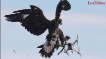 Plus forts que les drones… les aigles !
