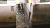 Etude de seiches dans le bassin à houles de l'ECN