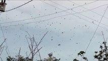 Ils remarquent ces petits points noirs dans le ciel. Ils vont vite regretter d'être sortis