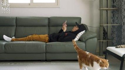 Circumstances when you lie next to cats 고양이들 앞에 누워있으면 생기는 상황들