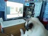 Las bromas! Una recopilación de Смешнот con Мопсами. 5 minutos de buen humor! new Funny Pugs Compilat