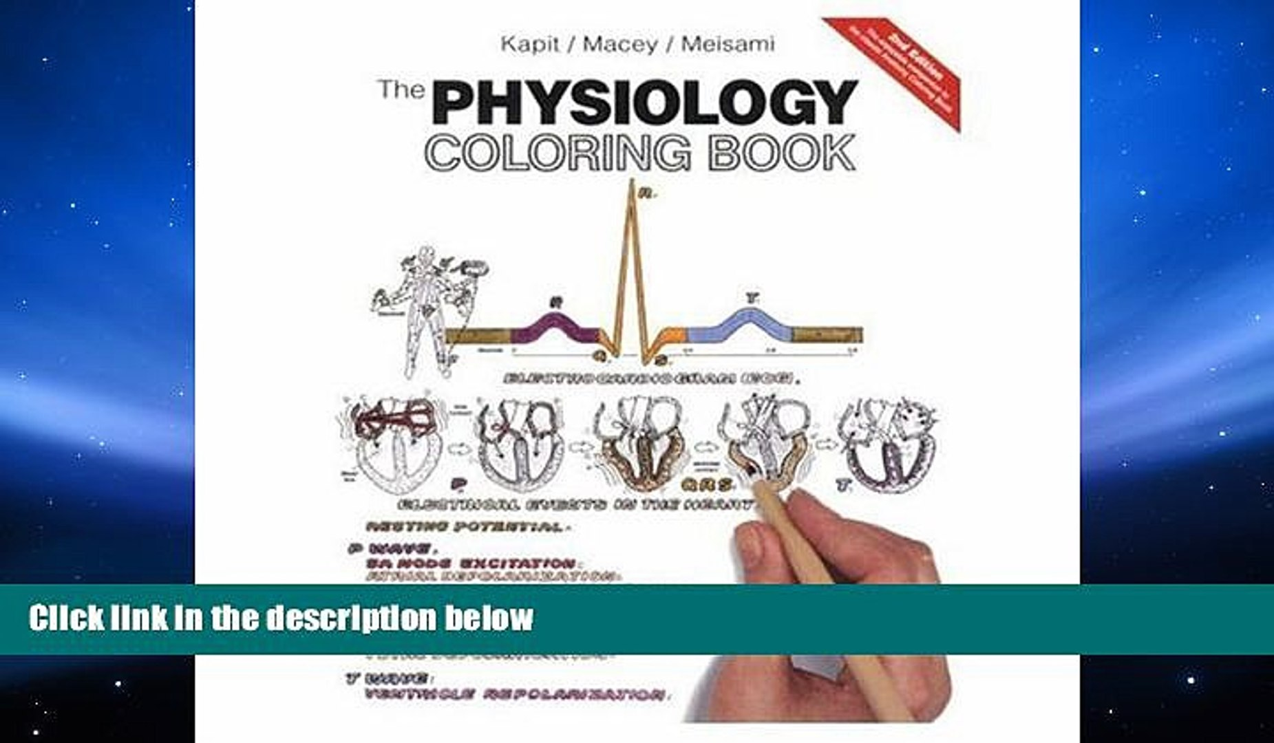 Read Online The Physiology Coloring Book (2nd Edition) Full Book