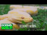 Born to Be Wild: Doc Nielsen inspects 15 exotic snakes found in suspected drug lord's home