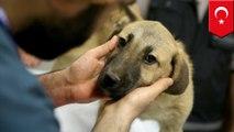 Anjing terjebak 11 hari di sumur, warga heboh berusaha menyelamatkan - Tomonews