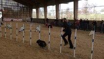 72 équipes, maître et chien, au concours d'agility près de Vire