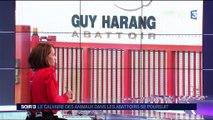 Yvelines : des actes de maltraitances filmés dans un abattoir de cochons