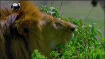 Top Batalhas de animais selvagens, Animais selvagens atacando, Animals, Confrontos animais, Serpentes atacando animais e