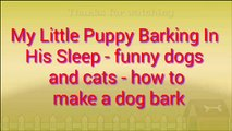 My Little Puppy Barking In His Sleep - funny dogs and cats - how to make a dog bark