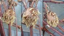 Voilà à quoi ressemble un nid de mantes religieuses