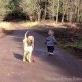 Ce bébé promène son chien et s'arrete pour jouer dans la flaque, regardez la réaction du chien