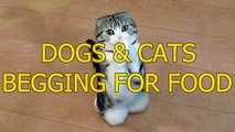 cute and funny cats and dogs begging for food