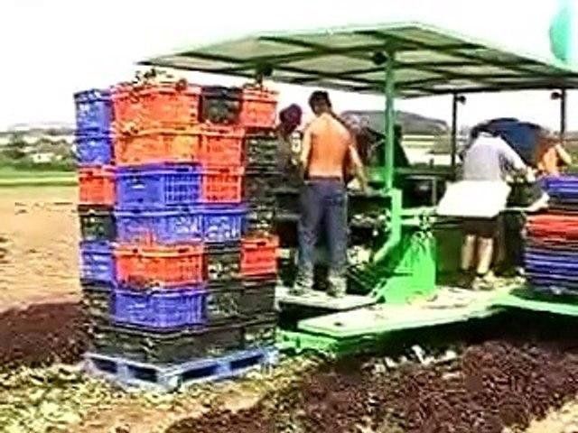Nông nghiệp Nhật Bản   Godialy.com