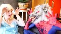 El hombre araña vs hombre Lobo y Rosa Spidergirl vs Vampiro En la Vida Real pies Congelados Elsa y Gemelos Spi