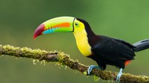 10 Rainforest Animals That Will Amaze You