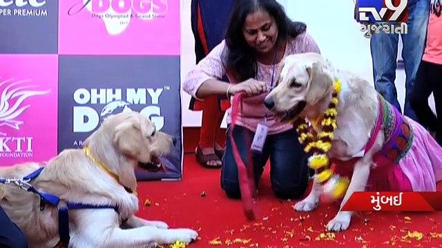 Pets find love at Mumbai dog wedding ceremony - Tv9 Gujarati