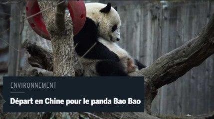 Le panda vedette Bao Bao quitte les États-Unis à bord d'un avion-cargo spécialement affrété