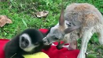 Cute Unlikely Animal Couples Compilation 2014dfho
