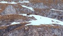 Destination montagnes : Pralognan la Vanoise
