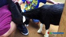 #ANIMALS POOPING AT THE ZOO Kid at the ZOO Funny Family Fun Trip to Petting Farm Animals f