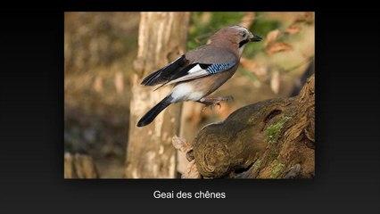 saut d'oiseau