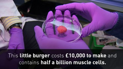 Scientists create lab-grown burgers