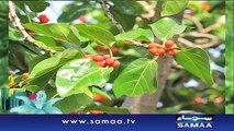 Subah Saverey Samaa Kay Saath | SAMAA TV | Madiha Naqvi | 25 Feb 2017