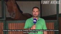 Ce cheval embête ce journaliste en direct