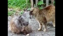 Funny cats and dogs - The Best Cat Fights - Brutal and Funny Cat Fights 2015 - Best Cat Videos -
