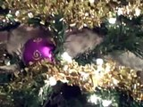 A Kitten In A Christmas Tree | 12 Days Of Christmas Parody