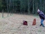 un marking devant le bois et deux aveugles dans le bois