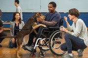 FREE A Dog's Way Home FULL|MOVIE (2019) Online English-Sub HD