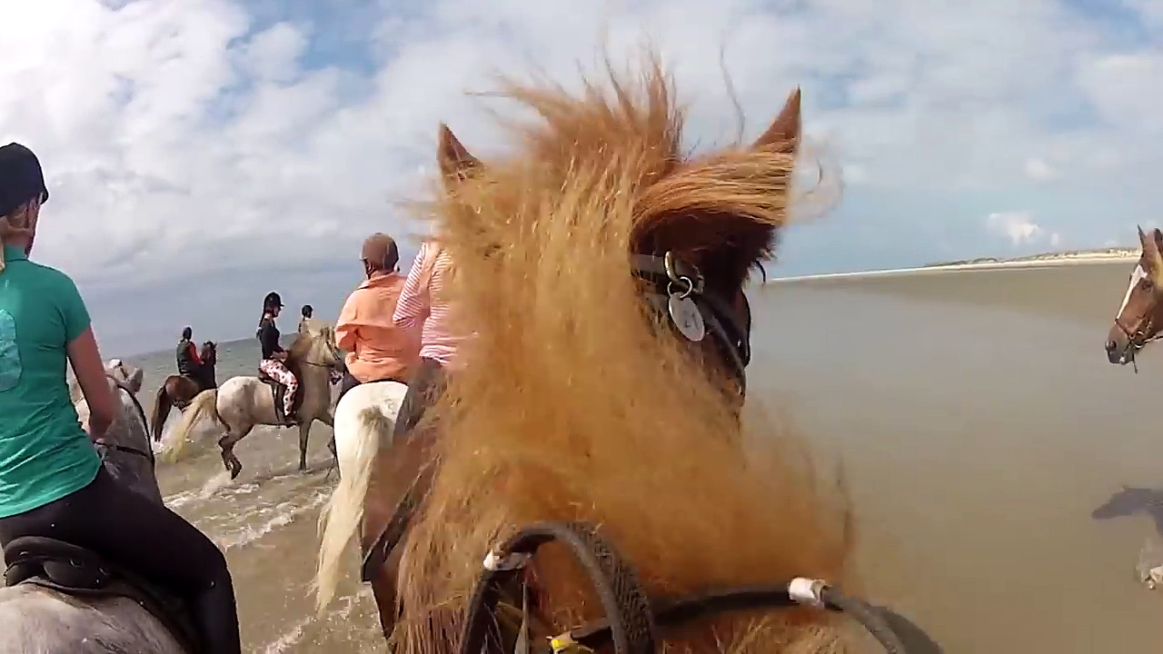 Horse Riding – Icelandic Horses for Kids