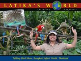 TALKING BIRD SHOW, BANGKOK SAFARI WORLD, THAILAND, LATIKAS WORLD
