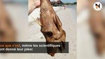 5 créatures qui existent réellement mais dont vous aurez du mal à croire leur existence!