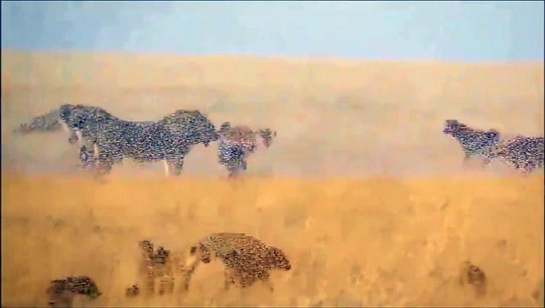 Thế giới động vật