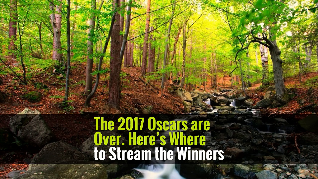 The 2017 Oscars are Over. Here's Where to Stream the Winners