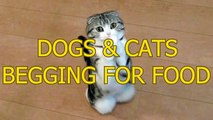 Funny Cute Dogs and Cats Begging For Food