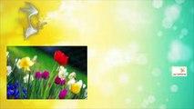 YCDTOTV - S1984 E76 - Seasons (Weather) - video dailymotion