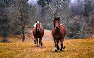[L'animal & l'homme] Savoir écouter les chevaux pour s'écouter soi-même