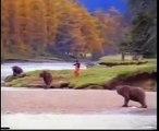 Funny Bear VS John West  FUNNY BEAR Ours drôle VS John West OURS ENFANT  滑稽熊VS约翰·西FUNNY熊  სასაცილო დათვი VS John West FUNNY BEAR  Lustiger Bär VS John West LUSTIGER BÄR अजीब बात है भालू वी एस  जॉन पश्चिम अजीब भालू  Funny Bear na nke John West akpa ọchị na