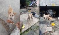Cette chienne n'hésite pas à demander de la nourriture pour nourrir ses chiots