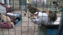 Le 18:18 : sept chats battus à mort, la SPA de Vaucluse sous le choc