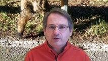 Campaña de terror: Cazadores furtivos cuelgan lobos muertos en espacios públicos de Asturias