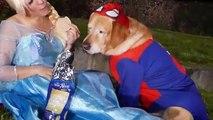 Spiderman y Spiderdog y Congelado Elsa Vs Joker y Pedo de Alimentos para Perros Broma Diversión Superhéroe En Real