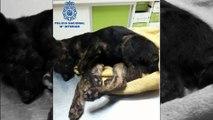 Vélez-Málaga: Policía rescata 2 cachorros en pésimo estado y detiene al dueño por maltrato animal